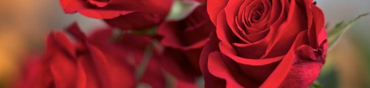 Online Psychic Advice – Valentine's Day Gift Ideas
